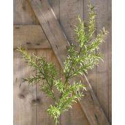 Ramo artificiale di asparagus sprengeri CRISTIANO, 80cm