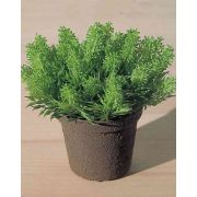 Pungitopo artificiale MARCUS in vaso decorativo, verde, 10cm