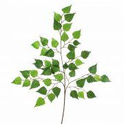 Rametto di betulla sintetico NIKOLAJ, verde, 70cm