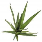 Aloe finto VERENA, su gambo zona trasversale, verde, 50cm, Ø40cm