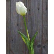 Tulipano artificiale LONA, bianco-verde, 45cm, Ø4cm