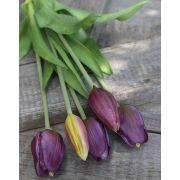 Mazzo di tulipani artificiali LONA, viola-verde, 35cm, Ø15cm