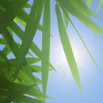 Piante artificiali con protezione UV